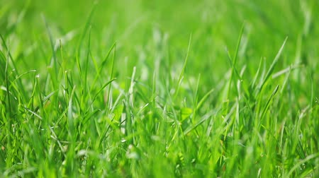zöld : Fresh new green grass sliding shot, macro view