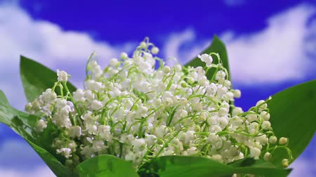 lilie : Lily of the valley bouquet rotating on sky background Dostupné videozáznamy