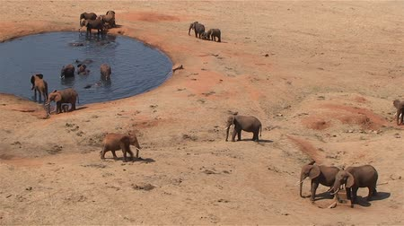 savci : Group of elephants at a waterhole