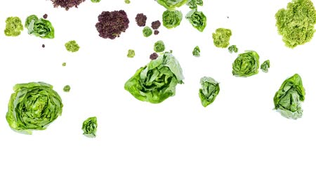 Lettuce falling down on white background Vídeos