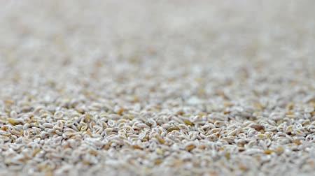 tohum : Portion of Psyllium Seeds (loopable full HD video)