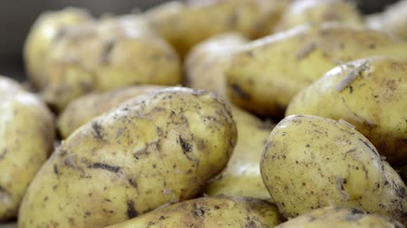 brambory : raw Potatoes (loopable
