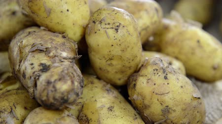 cultivo : Portion of raw Potatoes (not loopable full HD video) Vídeos
