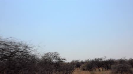Game Drive (at Hwange National Park, Zimbabwe) as 4K UHD footage