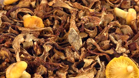 mycelium : Fresh made Dried Chanterelles (seamless loopable; 4K) Stock Footage