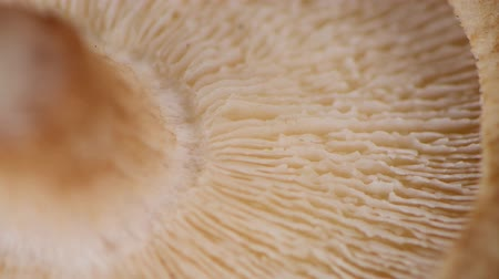 shiitake : Rotating Shiitake mushrooms (seamless loopable; 4K)