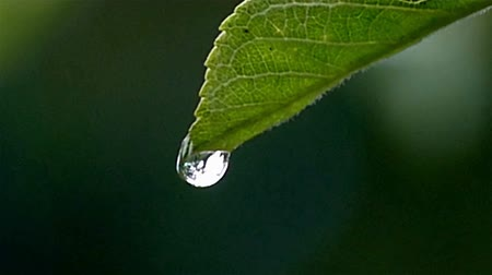 gota de orvalho : A drop on a leaf falls in large hd