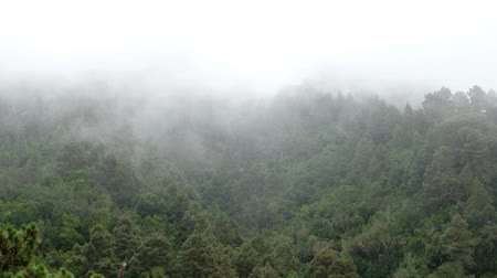 vanish : Clouds in forest mountain, conifer trees in mist, foggy weather
