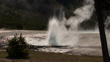 termal : Small geyser in Yellowstone National Park