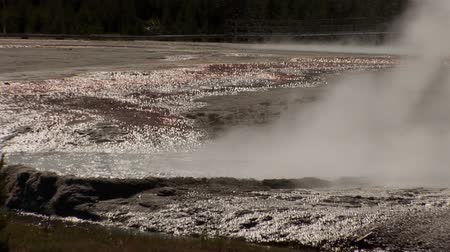 fenomen : Small geyser in Yellowstone National Park