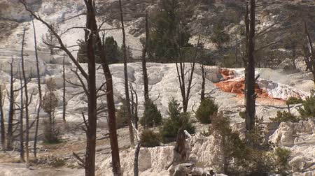 mammut : Mammoth Hot Springs nel parco nazionale di Yellowstone