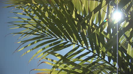napfény : Palm leaves with sun