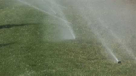 irrigate : Sprinkler system Stock Footage
