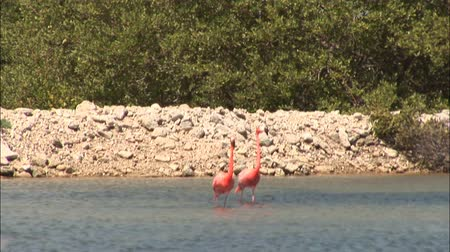 flaming : Two flamingos on Bonaire