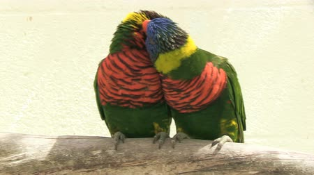 papuga : Two parrots on a swinging branch