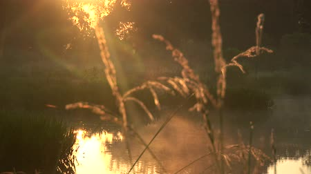 descanso : Dawn at a swamp