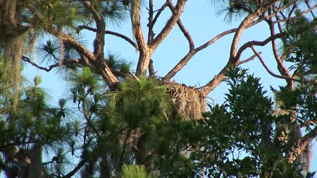 bird family : Empty nest Stock Footage