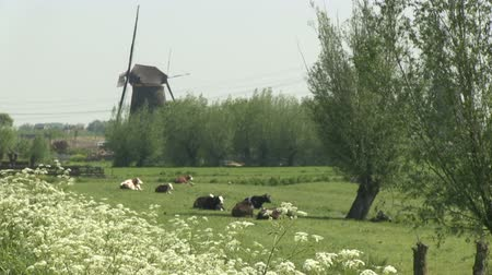 голландский : Dutch windmills near Kinderdijk, The Netherlands Стоковые видеозаписи