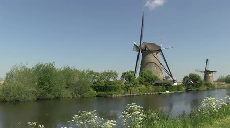 kamış : Dutch windmills near Kinderdijk, The Netherlands Stok Video