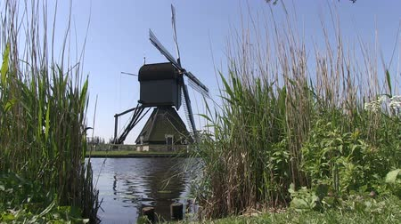 kamış : Dutch windmill near Kinderdijk, The Netherlands Stok Video