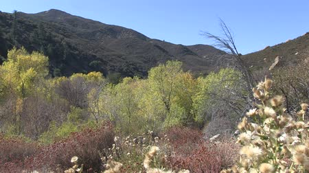 bétula : Los Padres National Forest in California