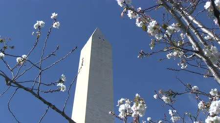 aguja : El monumento de Washington en el National Mall en Washington, DC