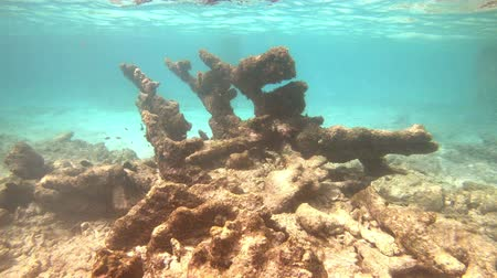 Underwater on Bonaire