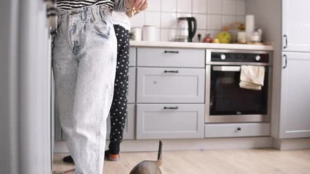 feline : woman is holding a piece of food in her hand, a cat is jumping for food in the kitchen Stock Footage