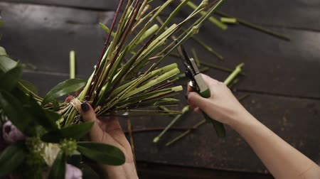 hortênsia : Beautiful female hands cut the stems of flowers with a pruner on a dark surface. Floral studio. Top shot