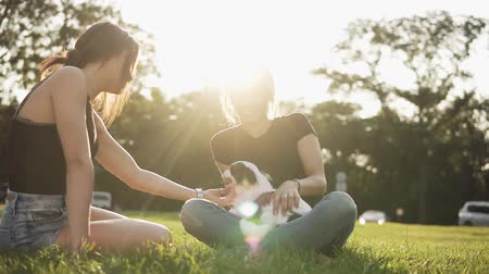 愛撫 : Pretty girl plays with a dog and sitting on the grass with her female friend. Animals, pets, friend, emotions. Beautiful green park with the sun shines on the background