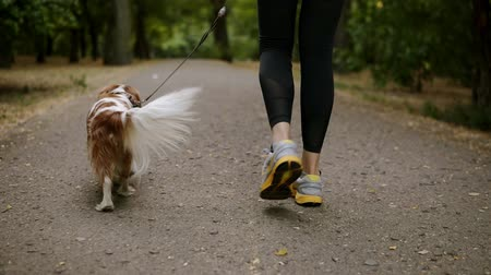 aimed : Aimed footage of a red and white spaniel walking in the park with his female owner. Woman in casual clothes and sneakers walking with her pet. No face Stock Footage