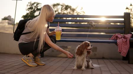 spanyel : Side view of long haired blonde woman in dark leggings and black backbag squating, caressing the spaniel near the street bench. Outdoors. Sun shines on the background