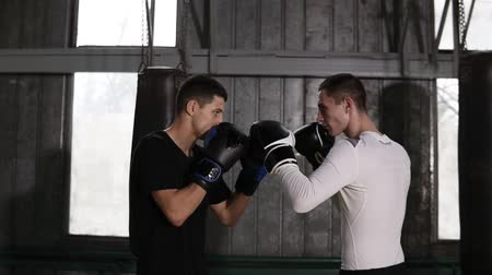 агрессивный : Two boxers in boxing gloves facing each other before sparring. Standing against grey background. Wearing casual, comfortable clothes for training. Moving away camera