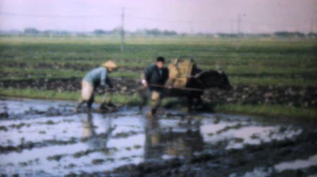 chapéu : Poor rural Japanese farmers working hard in their rice fields in 1950. Vídeos