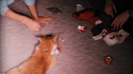 régi : A poor calico cat is teased with a Christmas ornament by its owners in 1967.