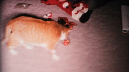 kotki : A funny calico cat plays with her Christmas ornament under the Christmas tree in 1967.