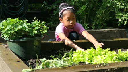 bitkisel : A cute little 9 year old Asian girl enjoys tending to her new garden in the summer.