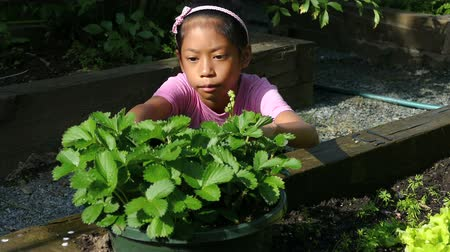 bahçıvan : A cute little 9 year old Asian girl enjoys tending to her new garden in the summer.