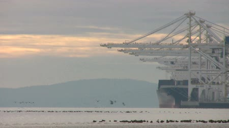 ithalat : Scores of birds take flight in front of large ships and davits in the port. Stok Video