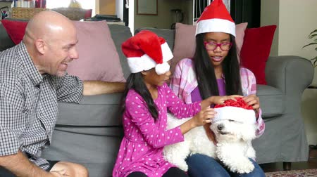 pigtailler : Two cute Asian sisters are excited to get a white furry Bichon Frise puppy for Christmas from their Daddy. Stok Video