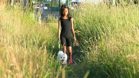 köpek yavrusu : A cute 9 year old Asian girl walks her Bichon Frise dog through a grassy field on a beautiful summer evening. Stok Video