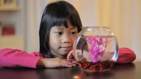 hayran olmak : A cute little 5 year old Asian girl feeds her pretty purple Betta fish.