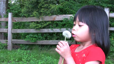 nasiona : A cute little Asian girl tries and tries to blow a dandelion and then her father comes in and blows the seeds all over her face.
