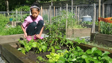 ogrodnik : A cute little 9 year old Asian girl enjoys tending to her new garden in the summer.