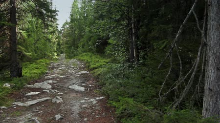 rotaları : Hiking trail high in the mountains of Sweden. Walking, hiking, leisure, nature.