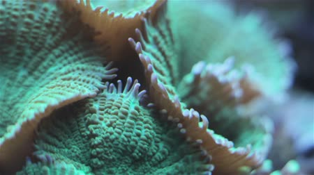 reef life : Coral and underwater marine life. Stock Footage