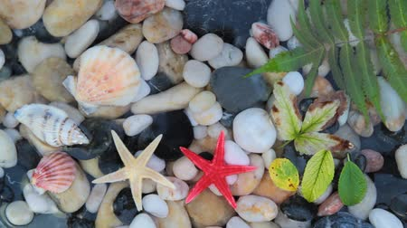 etoile de mer : Pebble stones, seashell, starfish in crystal clear water.