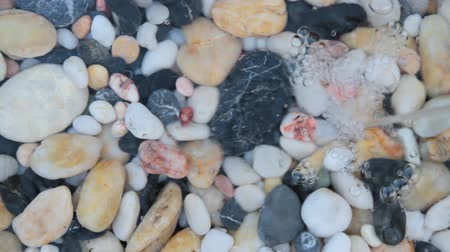 plash : Starfishes, pebble stones  and seashells in running crystal clear water