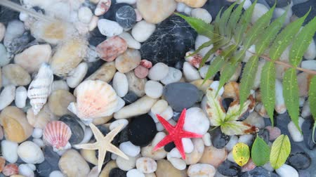 seixo : Pebble stones, seashell, starfish in crystal clear water.