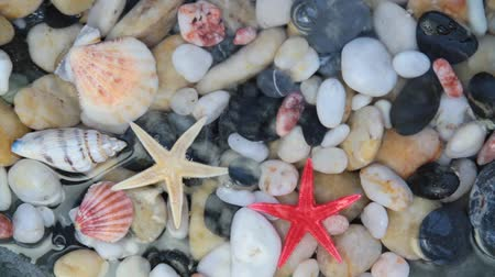 plash : Pebble stones, seashell, starfish in crystal clear water.